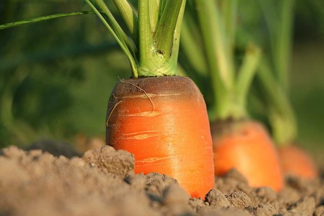 Компенсации за утраченный урожай начнут выплачивать с 27 февраля