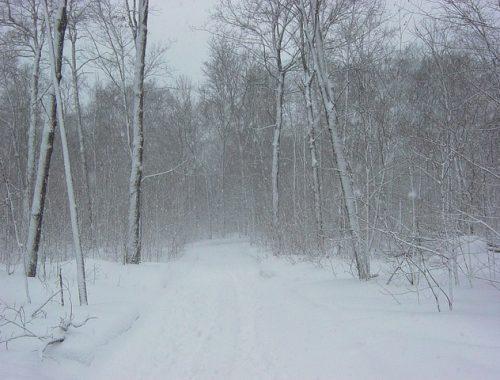На ЕАО обрушится сильный снегопад