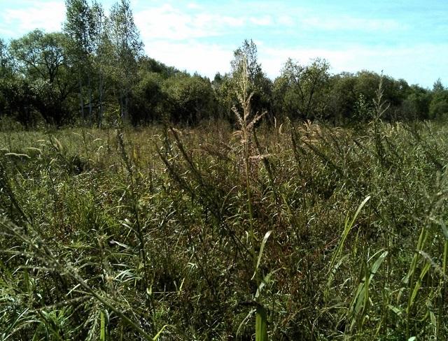 За сорняки наказали крупным штрафом фермера в ЕАО