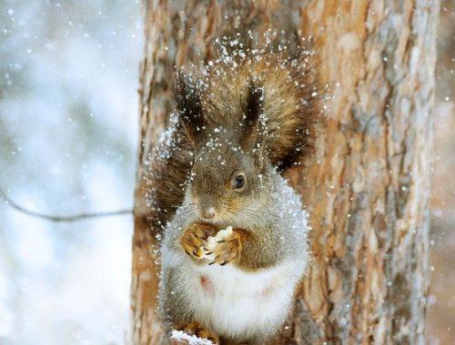 Снежным и ветреным будет январь в ЕАО