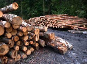 Жалоб на дороговизну дров в мэрию Биробиджана не поступало