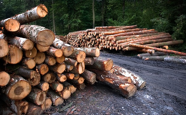 Дальний Восток стал лидером по контрабанде леса