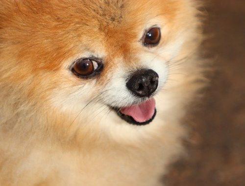 Биробиджанка нарвалась на аферистов при покупке щенка