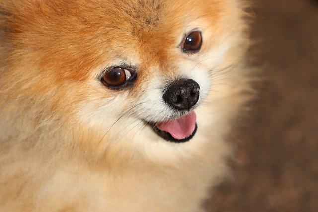 Биробиджанку обманули при покупке породистого щенка