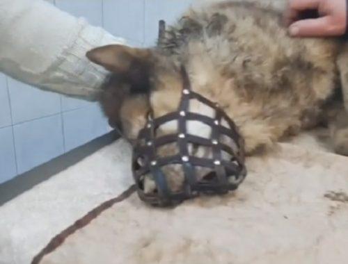 Спасатели вытащили из колодца замерзшую собаку в ЕАО