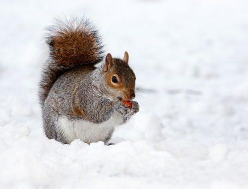 Зима позиции не сдает: жителей ЕАО ожидает снежный февраль