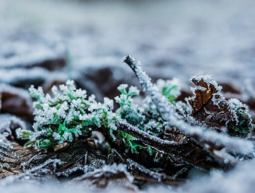 Небольшой снег ожидают в марте в ЕАО