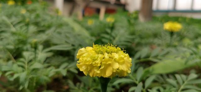 Около двух млн рублей потратят на цветы для Биробиджана