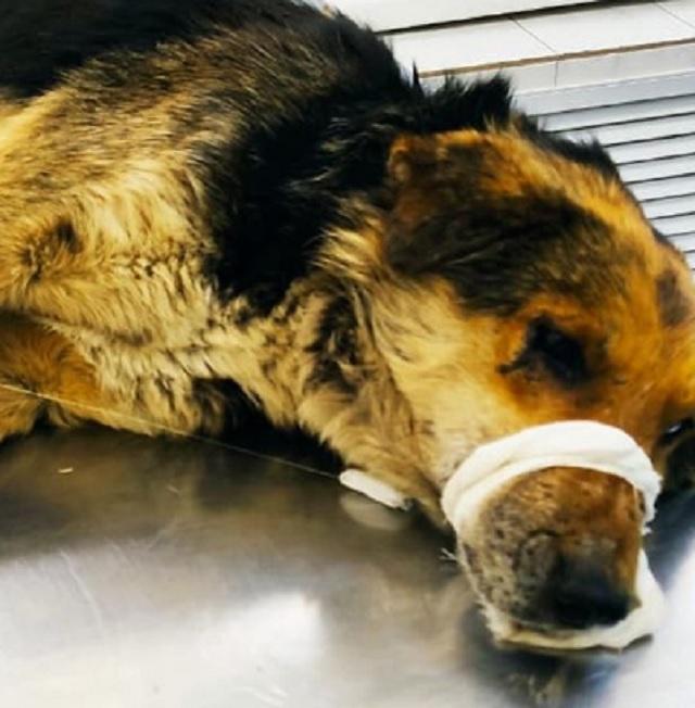 Уголовное дело о жестоком обращении с животным возбуждено в Биробиджане