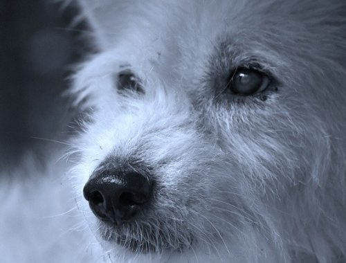 За лающих по ночам собак хотят наказывать россиян