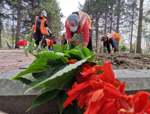 В Биробиджане приступили к высадке цветов