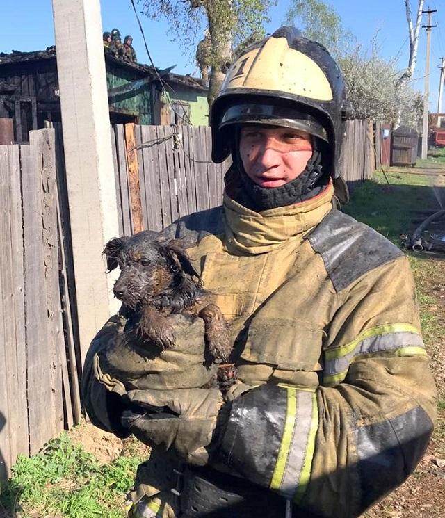 Трехмесячного щенка спасли огнеборцы Биробиджана из горящего дома