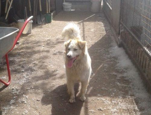 Спасенная год назад из битумной ямы собака все еще ждет своего хозяина
