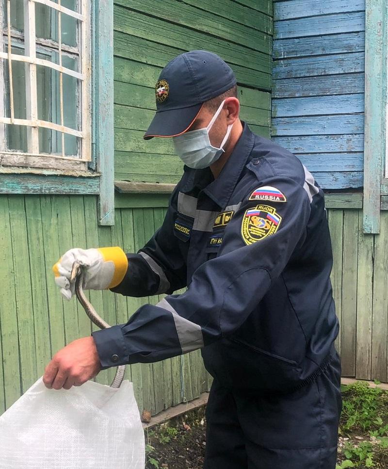 Ядовитую змею отловили спасатели МЧС в ЕАО