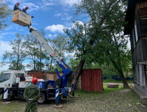 Аварийный тополь едва не разрушил многоквартирный дом в ЕАО