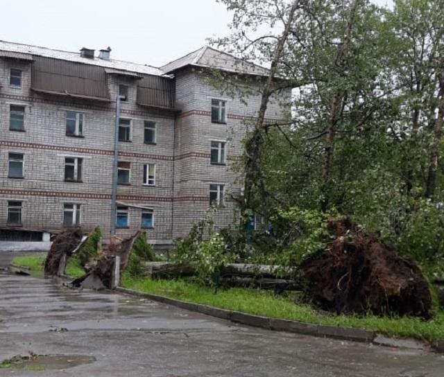 Деревья вырвало с корнем: мощный ливень с ветром накрыл Теплоозерск