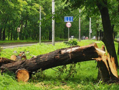 Повалил деревья мощный ветер в Биробиджане (ФОТО)