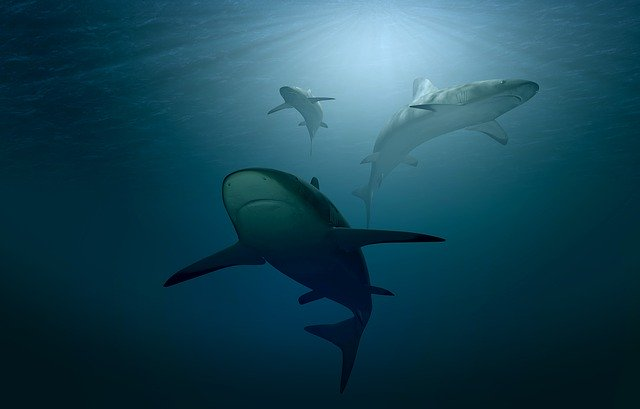 Акулы в Приморье: названы места, где купаться опасно