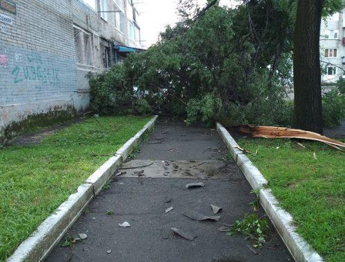 Все усыпано кусками шифера и стекла, поваленные деревья — последствия разгула стихии в Биробиджане (ФОТО)