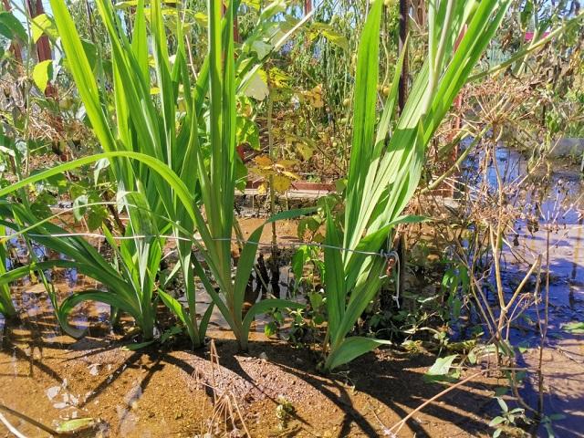 В Биробиджане подтоплено 575 дворов