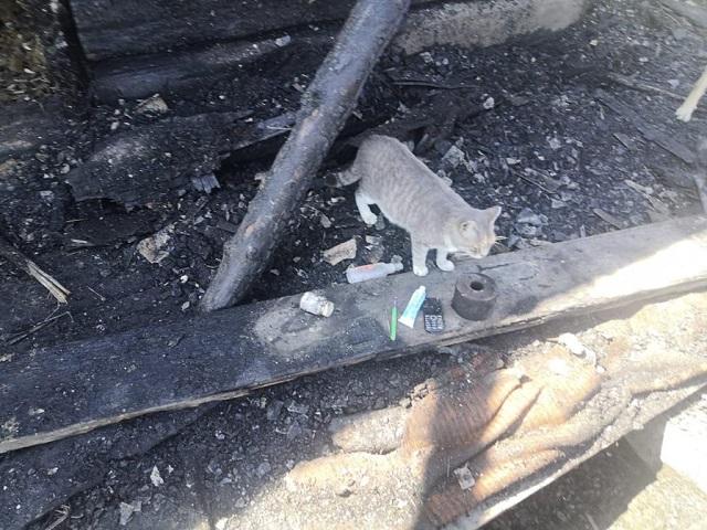 Кошка спасла хозяев при ночном пожаре в Биробиджане