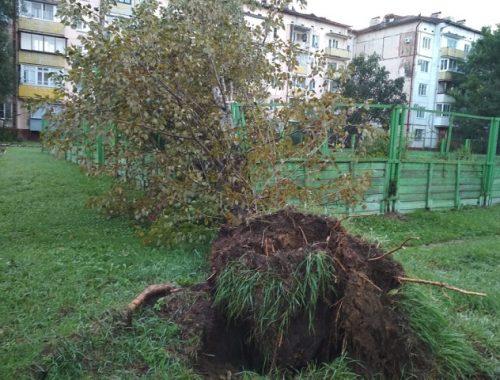 В мэрии Биробиджана сообщили о последствиях мощного ливня с ветром