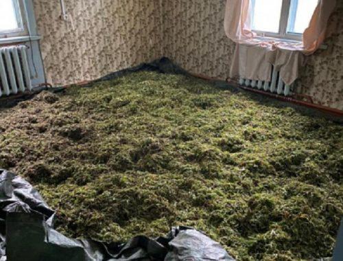 Заброшенный дом с крупной партией наркотиков обнаружили в ЕАО