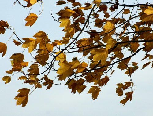 Натворить бед может сильный ветер в ЕАО