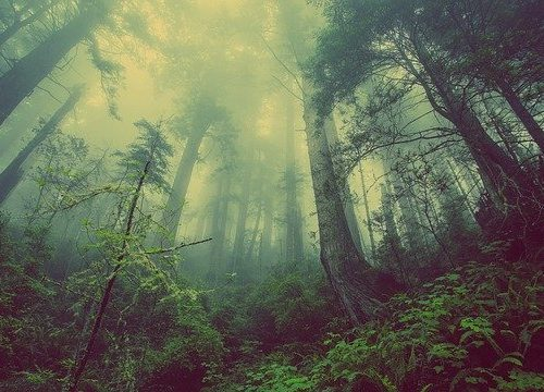 Биробиджанец пять дней провел в лесу без пищи и воды