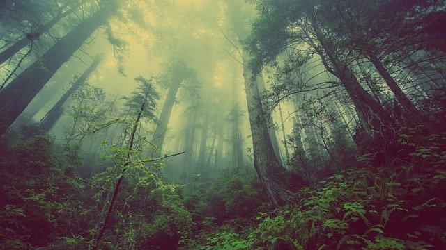 Семейную пару ищут в лесу спасатели ЕАО