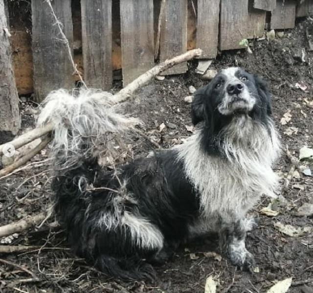 Из колючего плена освободили собаку биробиджанские спасатели