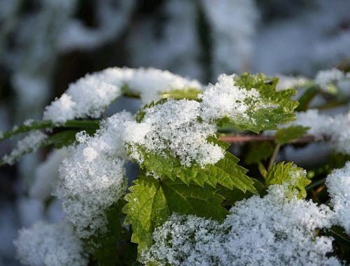 Скоро ли ударят морозы? Жителям ЕАО рассказали о погоде в ноябре