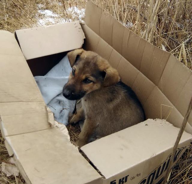 Бездомные животные Биробиджана: дело сдвинулось с мертвой точки