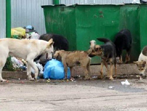 Власти еще одного района ЕАО попали в немилость к прокуратуре из-за бродячих собак