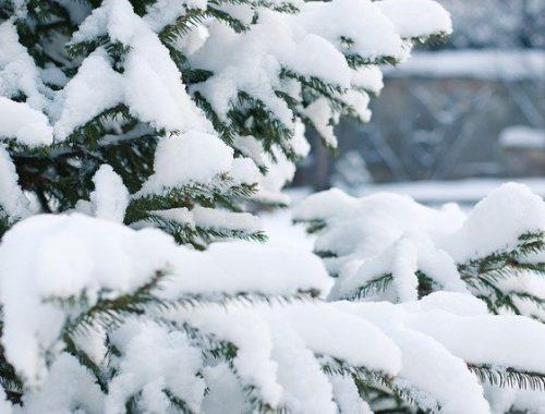 Морозы до -33 градусов и снег обещают жителям ЕАО в январе