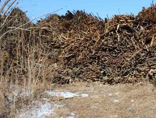 Лесоперерабатывающие предприятия самовольно заняли земли в Биробиджане