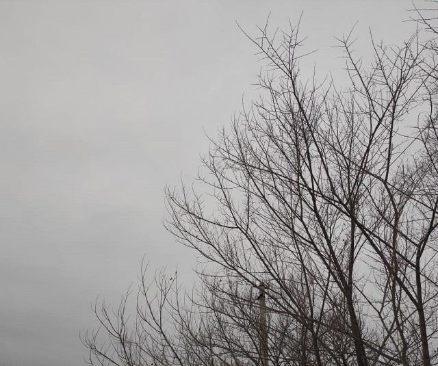 Мощный ветер может обрушиться сегодня на ЕАО