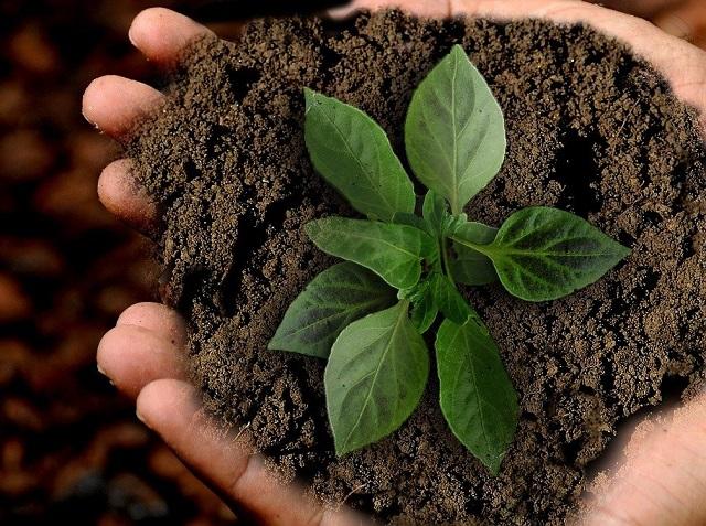 Посылку с землей и семенами получила биробиджанка вместо штор