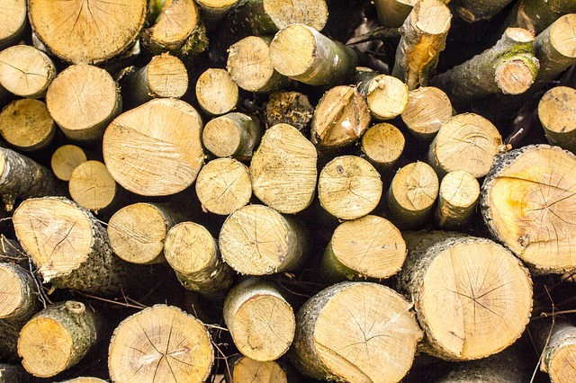 В ЕАО существенно снизился объем незаконной вырубки леса
