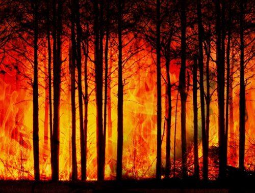 Глав поселений раскритиковали за подготовку к пожароопасному сезону в ЕАО