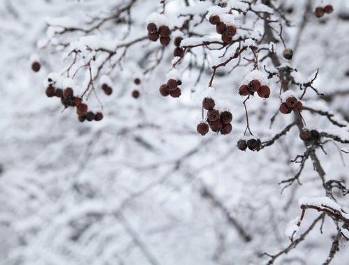 Утро с «@»: обзор событий, прогноз погоды на 7 марта, сводка МЧС