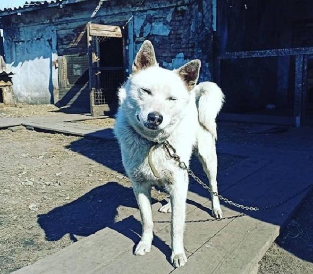 Возьмите друга в семью: ярмарка бездомных животных пройдет сегодня в Биробиджане