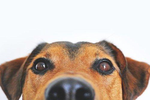 Домашних животных в России обследуют на коронавирус