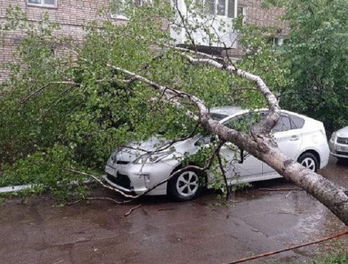 Дерево рухнуло на автомобиль в Биробиджане