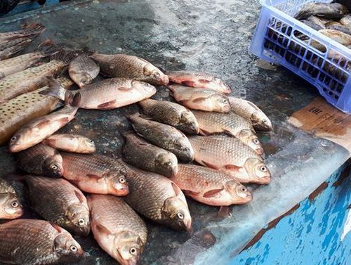 На торговцев рыбой составили протоколы в Биробиджане