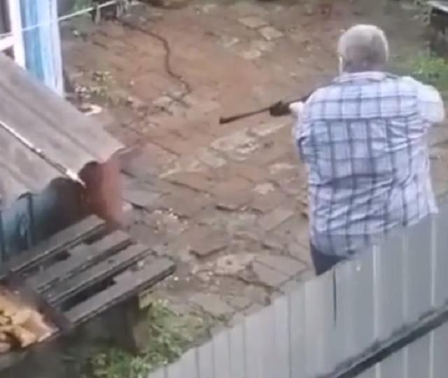 Застрелить собаку из ружья пытались в Биробиджане, возбуждено уголовное дело