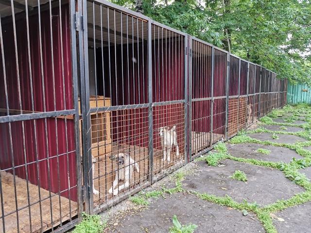 В Биробиджане 122 собаки прошли процедуру ОСВВ