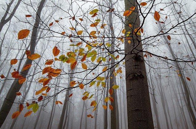 Нововведения октября: какие законы вступают в силу